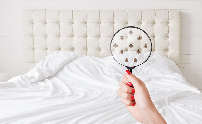 bed bug under magnify glass PHOTO: ISTOCK.COM/SEMENTSOVALESIA