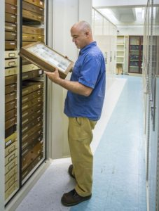 Andy Deans, professor of entomology and director of the Frost Entomological Museum, examines specimens from the museum's collection of more than a million arthropods. PHOTO: NICK SLOFF, PENN STATE DEPARTMENT OF ENTOMOLOGY