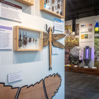 After closing in 2013 for renovations, the Frost Entomological Museum has reopened with expanded public space and new exhibits. PHOTO: NICK SLOFF, PENN STATE DEPARTMENT OF ENTOMOLOGY