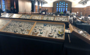 Dave Capps' personal insect collection at the Purdue Pest Management Conference. PHOTO: HEATHER GOOCH