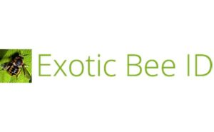 LOGO: EXOTIC BEE ID
