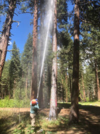 A Pestmaster Services technician treats ponderosa pines in Sawtooth National Forest. PHOTO: PESTMASTER SERVICES