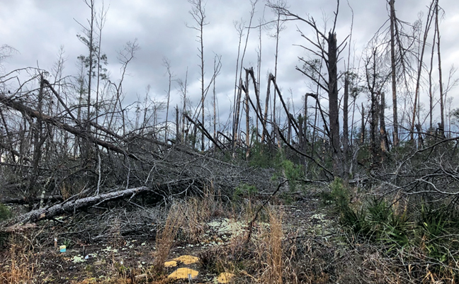 Chipola Experimental Forest plots (bottom left) and remnants of the tree canopy in February 2020. (PHOTO: DR. THOMAS SHELTON/USFS)